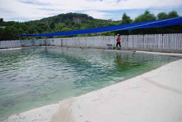 很大的泳池.JPG