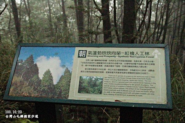 山毛櫸-036.JPG