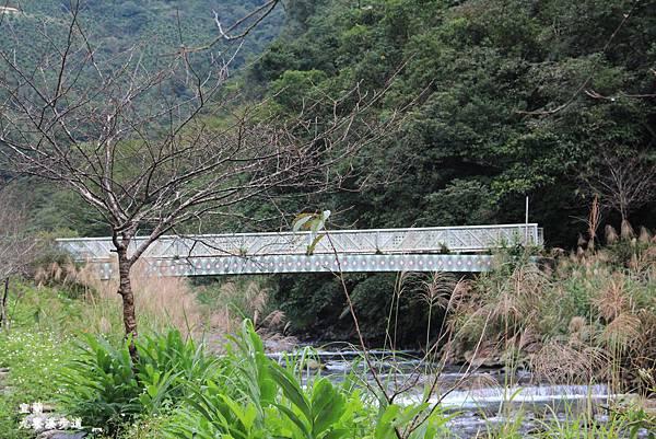 九寮溪步道-021.JPG
