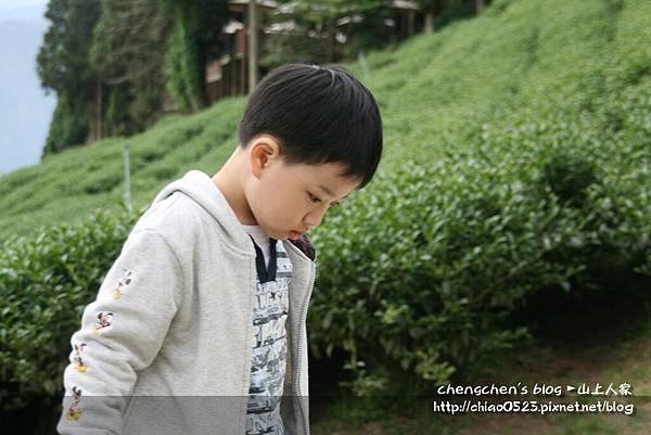 山上人家2011_0430_012.jpg
