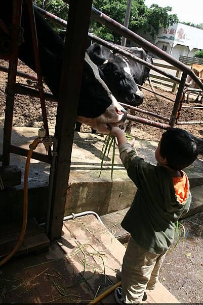 2010_0501_105648埔心農場.JPG