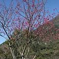 松鶴_2011_0206_100434_013.jpg