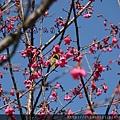松鶴_2011_0206_112748_097.jpg