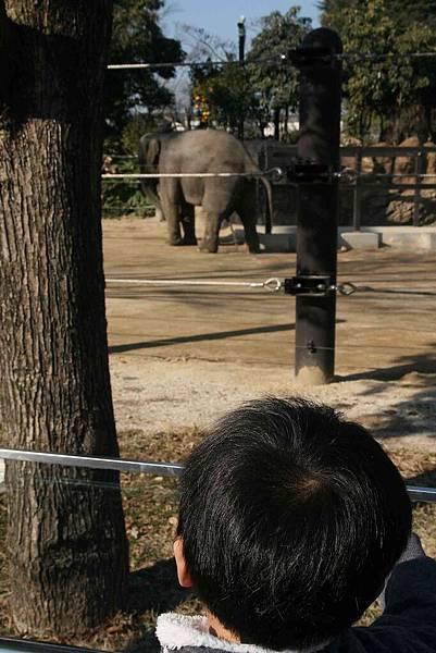 2010_0119_115930(尿尿的大象).jpg