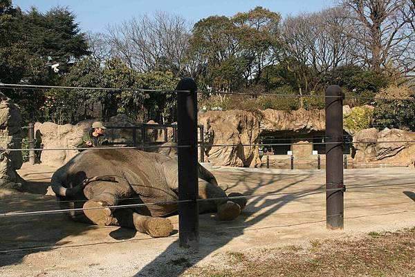 2010_0119_121049(幫大象刷背).jpg