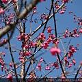 松鶴_2011_0206_112746_096.jpg
