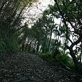 松鶴_2011_0205_160608.jpg