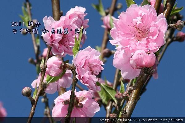 松鶴_2011_0206_100307_092.jpg