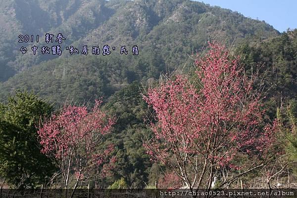 松鶴_2011_0205_153310_010.jpg