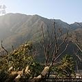 松鶴2011_0205_163505.jpg