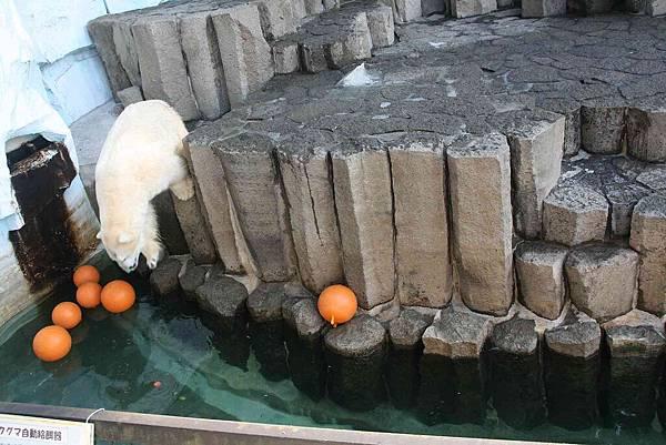 2010_0119_122902(下水搶食物囉).jpg