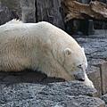 2010_0119_122509北極熊.jpg