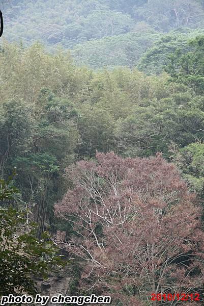 2010_1212_145635苗栗南庄.jpg