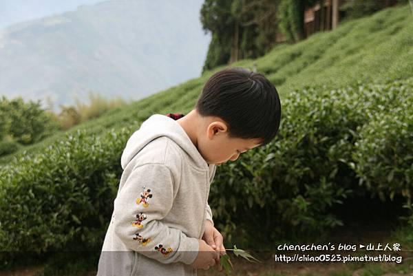 山上人家2011_0430_011.jpg