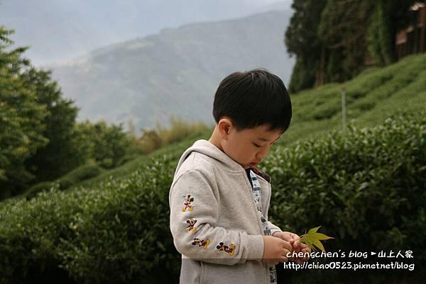 山上人家2011_0430_015.jpg
