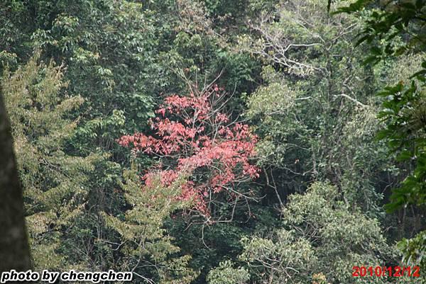 2010_1212_145647苗栗南庄.jpg