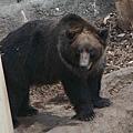 2010_0119_122413棕熊.jpg