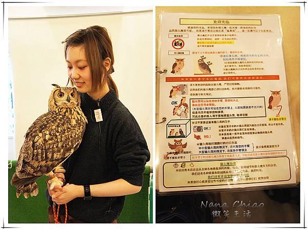 QSAKA OWL FAMILY08.jpg