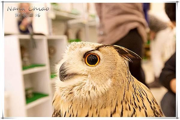 QSAKA OWL FAMILY10.jpg