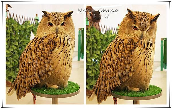 QSAKA OWL FAMILY11.jpg
