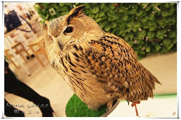 QSAKA OWL FAMILY09.jpg