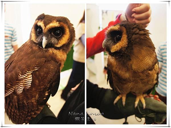 QSAKA OWL FAMILY12.jpg