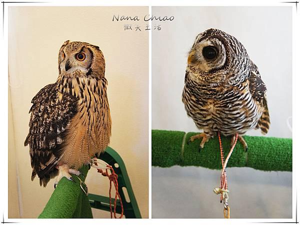 QSAKA OWL FAMILY13.jpg