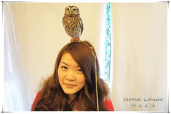 QSAKA OWL FAMILY14.jpg