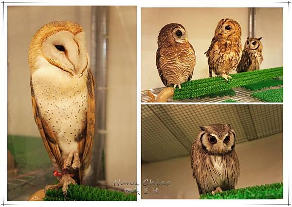 QSAKA OWL FAMILY15.jpg