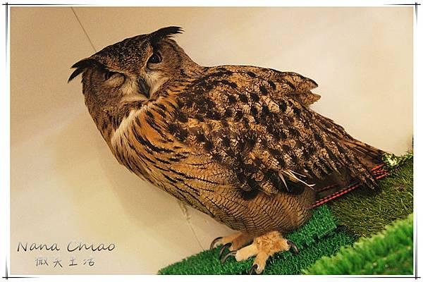 QSAKA OWL FAMILY16.jpg
