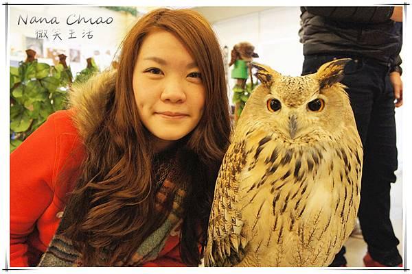 QSAKA OWL FAMILY18.jpg