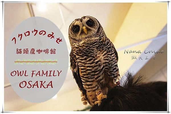 QSAKA OWL FAMILY