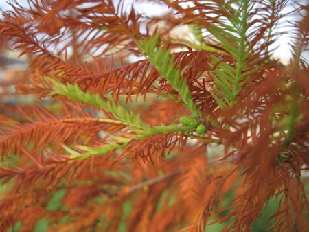 2008 宜蘭之旅 傳藝中心 紅紅的樹