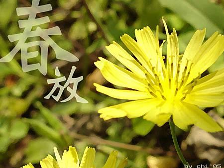sp01_l.jpg