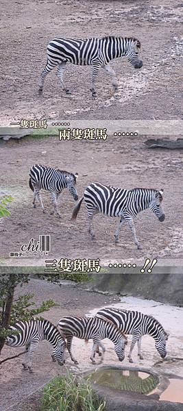 zoo.rar