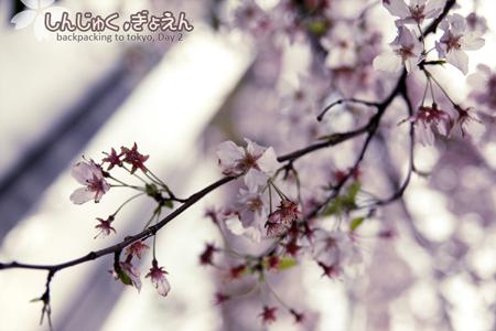 IMG_0254_s.jpg