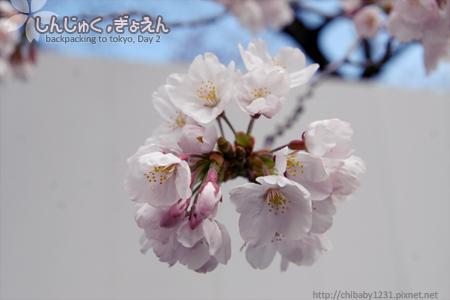 IMG_0292_s.jpg