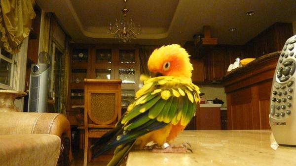 你待會再拍,我整理整理羽毛啦!