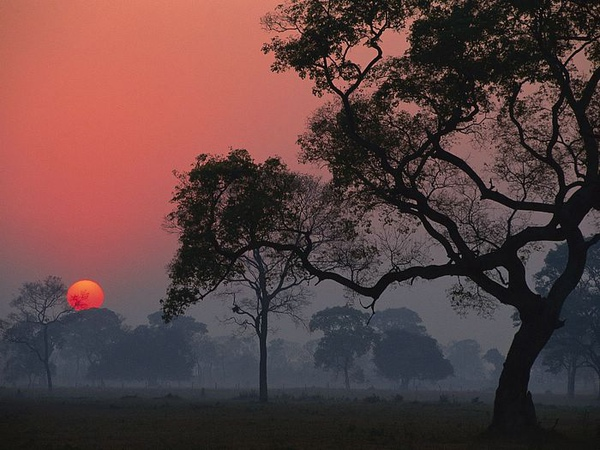 巴西:潘塔努自然保护区日出