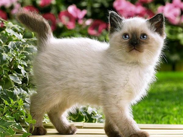 幼猫.jpg