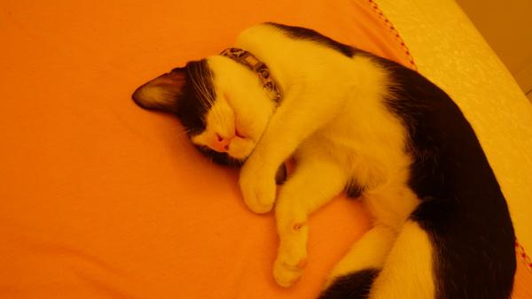 好搞笑的睡姿