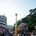 淡水天元宮櫻滿開2012 (3)