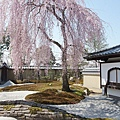 京都-高台寺花見 (27)
