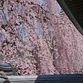 京都-高台寺花見 (46)