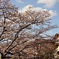 京都哲學之道 (2)