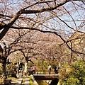 京都哲學之道 (4)