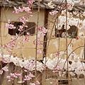 京都白川通-白川北通 (11)