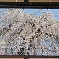 京都-二年板 (3)