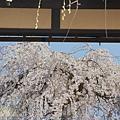 京都-二年板 (4)