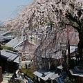 京都-二年板 (5)